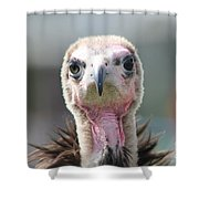 Maggee The Hooded Vulture Shower Curtain