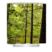 Magic Of The Golden Forest Shower Curtain