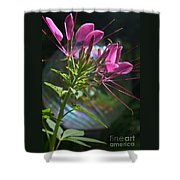 Magical Cleome Shower Curtain