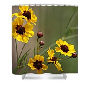 Magical Coreopsis Tinctoria Wildflowers Shower Curtain