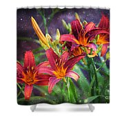 Magical Evening Daylilies Shower Curtain