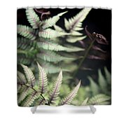 Magical Forest 1 Shower Curtain