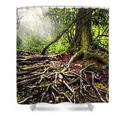 Magical Light On The Appalachian Trail Shower Curtain by Debra and Dave Vanderlaan