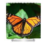 Magical Monarch Shower Curtain