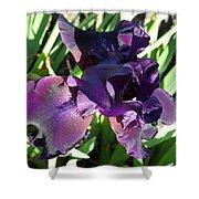 Magical Purple Iridescent  Iris Shower Curtain