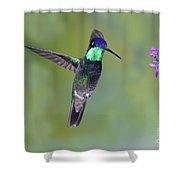 Magnificant Hummingbird Shower Curtain