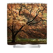 Magnificent Autumn Shower Curtain by Anne Gilbert