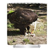 Magnificent Bald Eagle Breakfast Shower Curtain