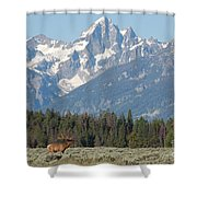 Magnificent Elk Shower Curtain