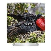 Magnificent Frigatebird Galapagos Shower Curtain
