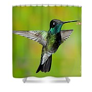 Magnificent Hummingbird Shower Curtain