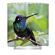 Magnificent Hummingibrd Male Shower Curtain
