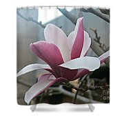 Magnificent Magnolia Blossom Shower Curtain