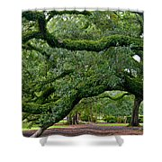 Magnificent Oak Alley Tree Shower Curtain