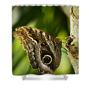 Magnificent Owl Butterfly Shower Curtain