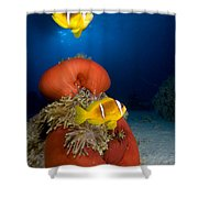 Magnificent Red Anemone With Anemone Fish Shower Curtain