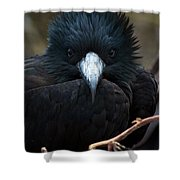 Magnificent Stare Shower Curtain
