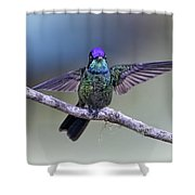 Magnificently Magnificent Hummer Shower Curtain