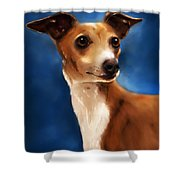 Magnifico - Italian Greyhound Shower Curtain by Michelle Wrighton