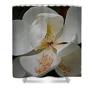 Magnolia 14-3 Shower Curtain