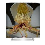 Magnolia 14-4 Shower Curtain