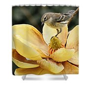 Magnolia And Warbler Photo Shower Curtain