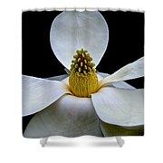Magnolia Beauty Shower Curtain