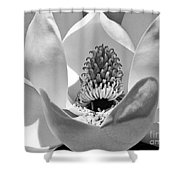Magnolia Bloom 3bw Shower Curtain