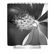 Magnolia Blossom - Photopower 2476 Bw Shower Curtain