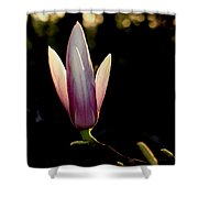 Magnolia Candle Shower Curtain