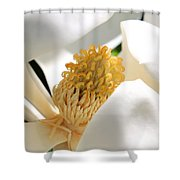 Magnolia Center Shower Curtain
