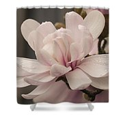 Magnolia Dream Shower Curtain