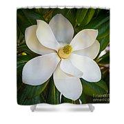 Magnolia Flower Shower Curtain