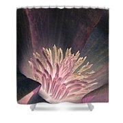 Magnolia Flower - Photopower 1824 Shower Curtain