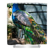 Magnolia Gardens Peacock Shower Curtain