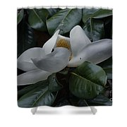 Magnolia In Full Bloom Shower Curtain