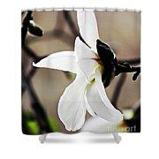 Magnolia In Profile Shower Curtain