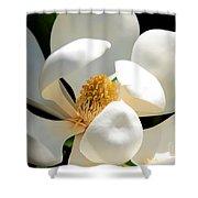 Magnolia Magic Shower Curtain