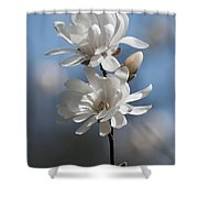 Magnolia Magnificence  3245 Shower Curtain
