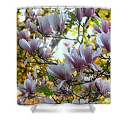 Magnolia Maidens In A Border Shower Curtain