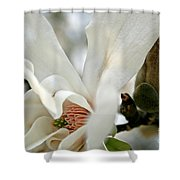Magnolia One Shower Curtain