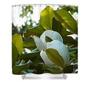 Magnolia Pair Shower Curtain