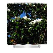 Magnolia Setting Shower Curtain