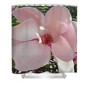 Magnolia Surprise Shower Curtain