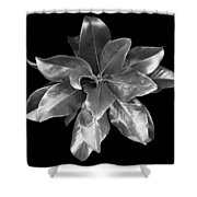 Magnolia Tree Leaves Shower Curtain