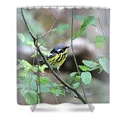 Magnolia Warbler - Bird Shower Curtain