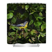 Magnolia Warbler Shower Curtain
