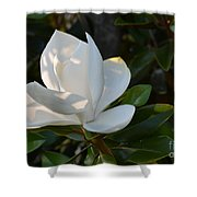 Magnolia With Best Bud Shower Curtain