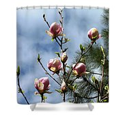 Magnolias In Bud Shower Curtain