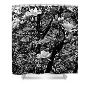 Magnolias In White Shower Curtain